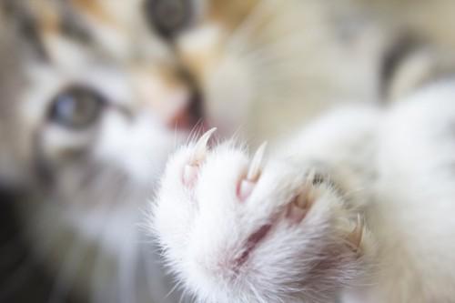 鋭い爪を出した猫の手アップ