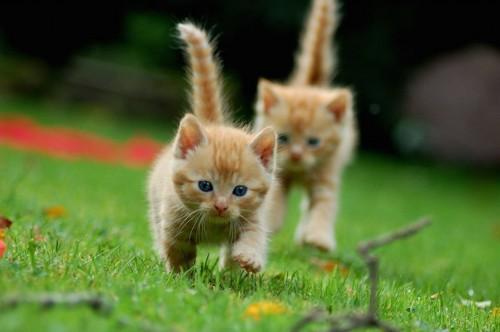 こちらに駆け寄る二匹の子猫