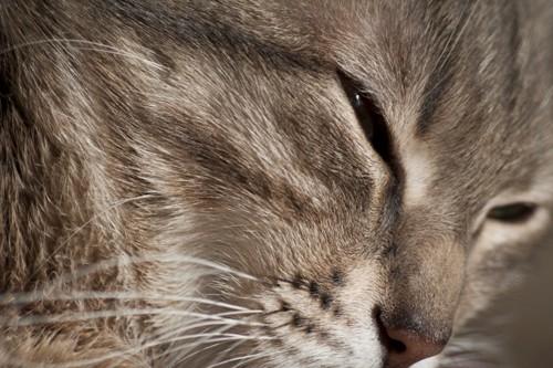 目を細めた猫の顏のアップ