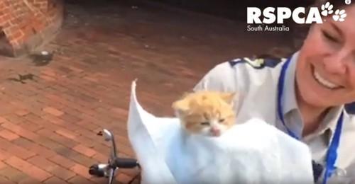 タオルで拭かれる子猫