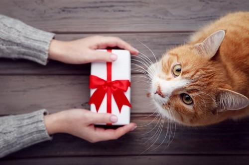 プレゼントを差し出す人と猫