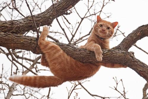 木登りして落ちそうになっている猫