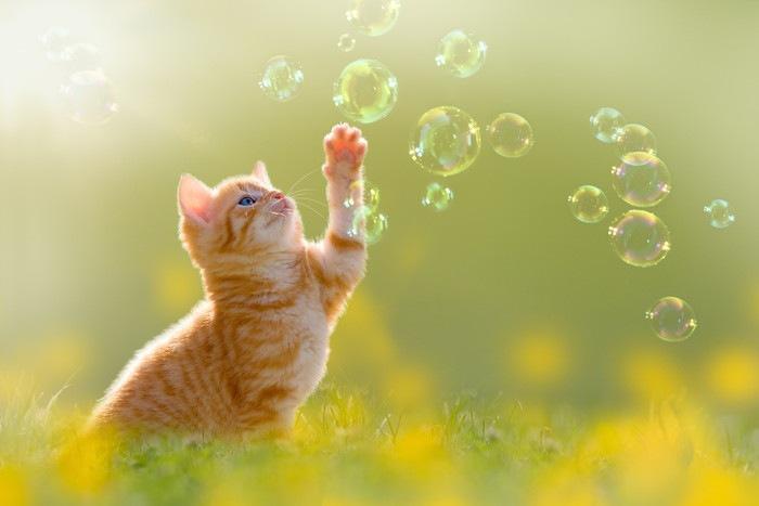 シャボン玉に手を伸ばす猫