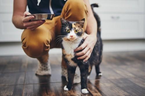 フード皿を持って猫を撫でる人