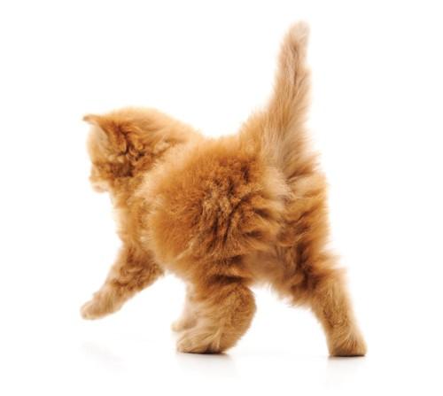 子猫の後ろ姿