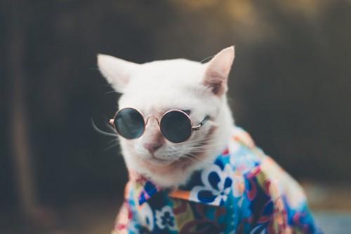 サングラスのイケ猫