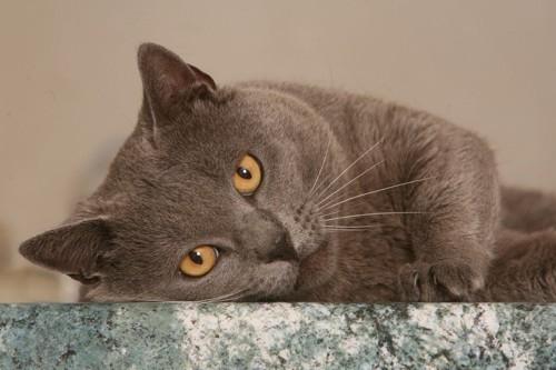 石のタイルと猫