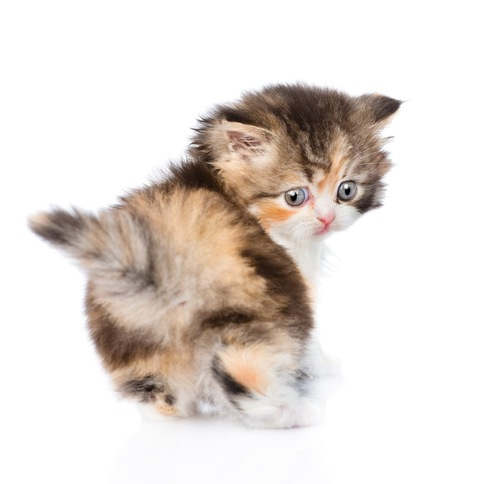 お尻を向けて振り返る子猫