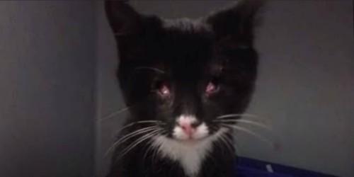 目が無い黒い子猫