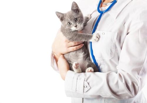 獣医に抱かれている猫