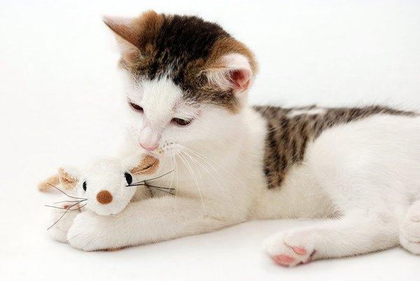 鼠のぬいぐるみと猫
