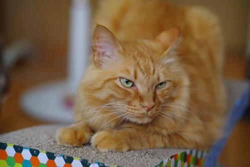 爪とぎの上にいる猫