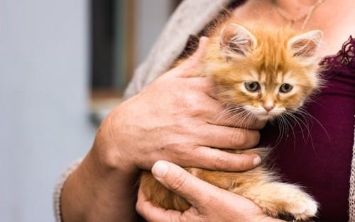 女性に抱っこされている子猫