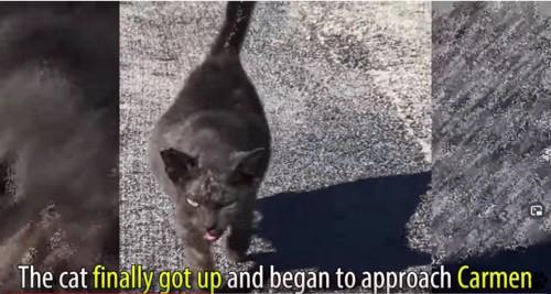 立ち上がり近寄る猫