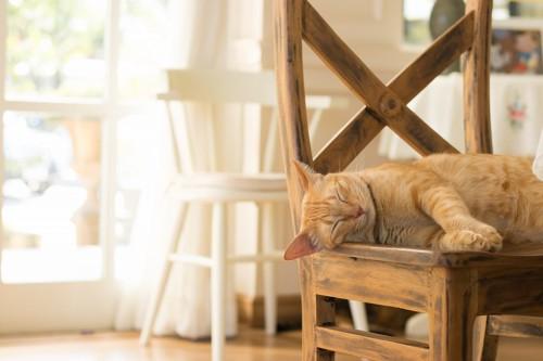 椅子の上で寝ているトラ猫