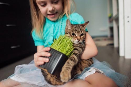 猫草を猫に与える少女