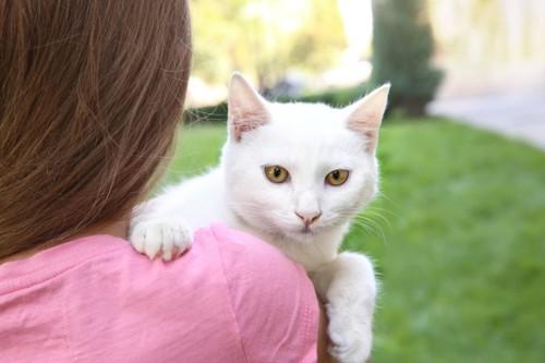 女の子に抱かれる白い猫