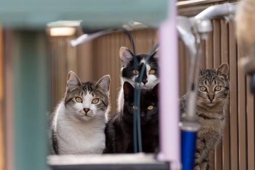 固まり凝視する4匹の猫たち