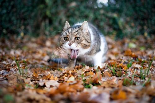 食べ物を吐出する猫