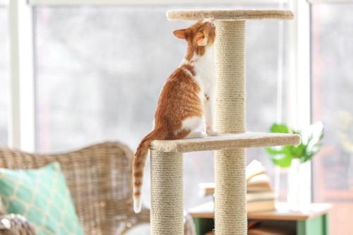 キャットタワーの麻縄を嗅ぐ猫