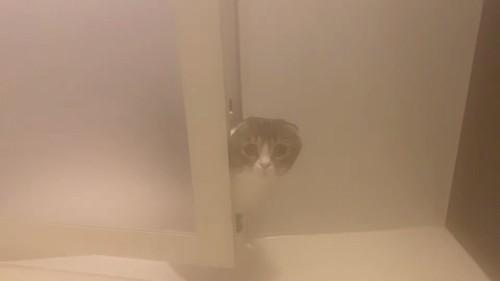 湯気のなかにいる猫
