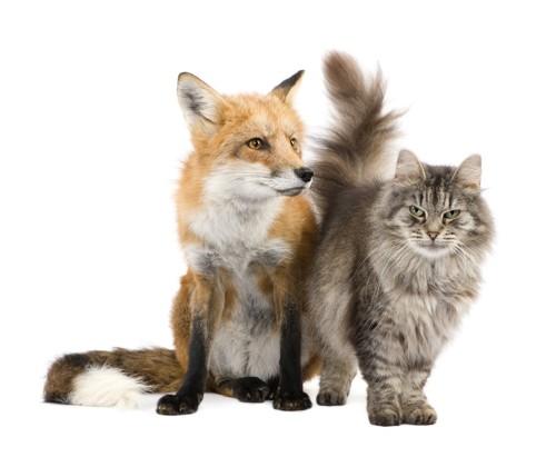 寄り添って座る狐と猫