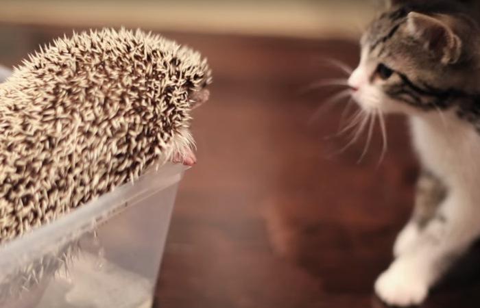 水浴び中のハリネズミと子猫