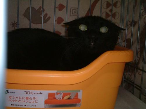 オレンジのトイレに入った黒猫