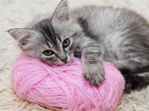 ピンクの毛糸玉を抱きしめる子猫