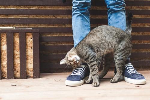 人の足に頭をこすりつける猫