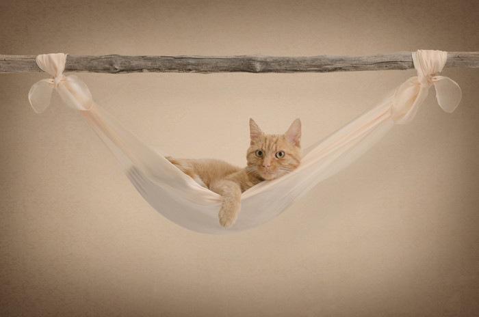木でできたハンモックでくつろぐ猫