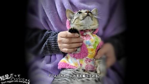 片手を上げられる猫
