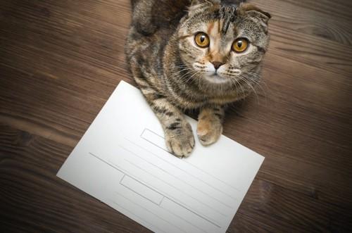 紙の上に手を置いて見上げる猫