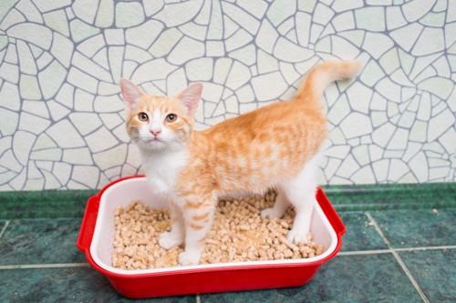 トイレの中にいる茶白猫
