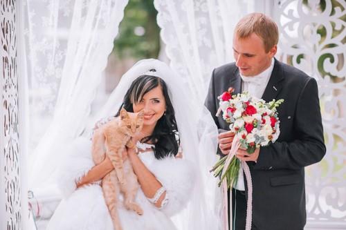 新郎の隣で花嫁に抱かれている猫