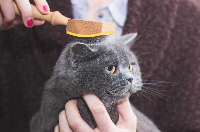 ブラシしてるグレーの猫
