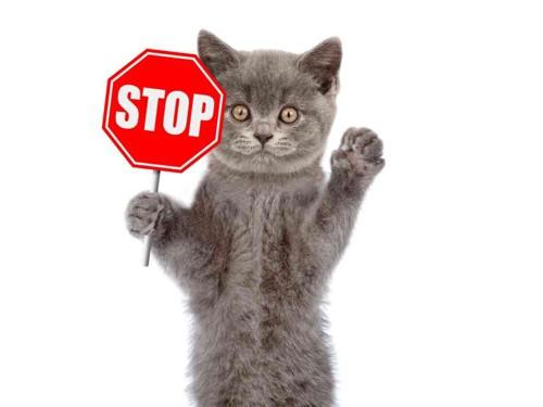 猫のSTOPサイン