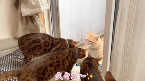 窓の外にいる猫を見る猫