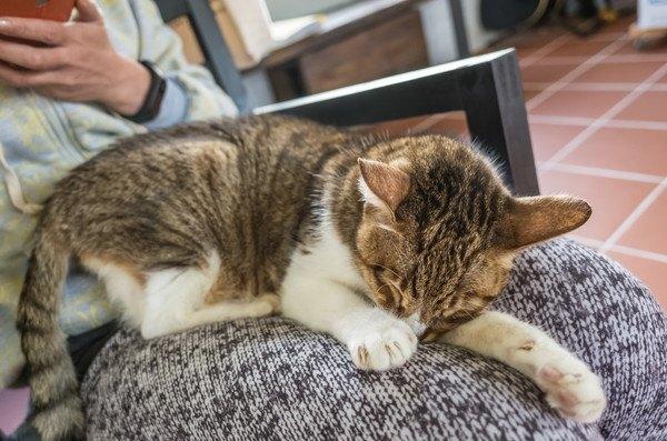 顔を隠して寝る猫