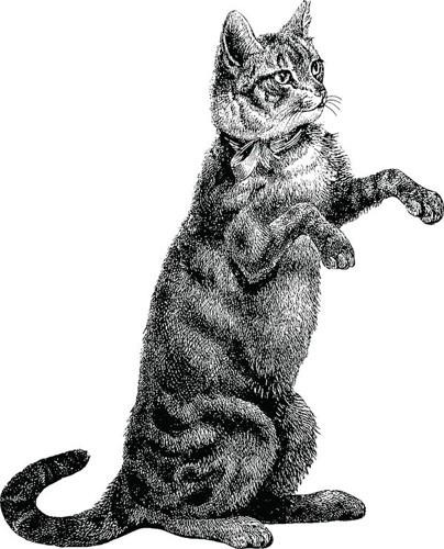 後ろ足で立とうとしている猫のデッサン画