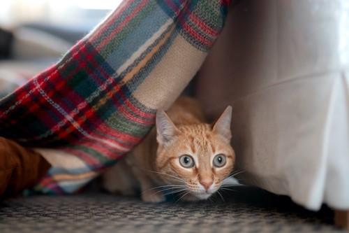 物陰に隠れて獲物を狙う猫