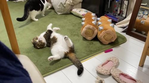 仰向けで見つめる猫
