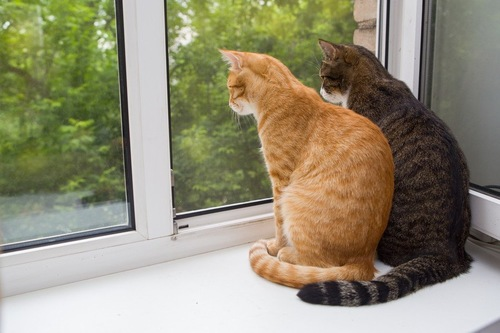 外を眺める猫達