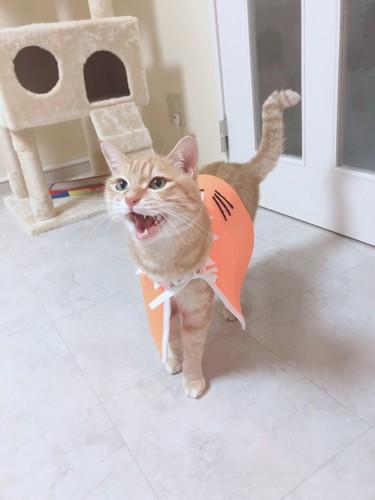 手作り衣装をきた愛猫チャロ