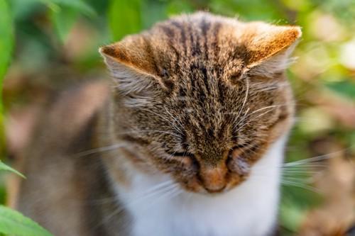 視線をそらす猫