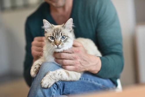 撫でられる猫を膝に乗せる人間