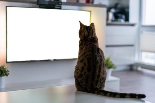 TVの前の猫