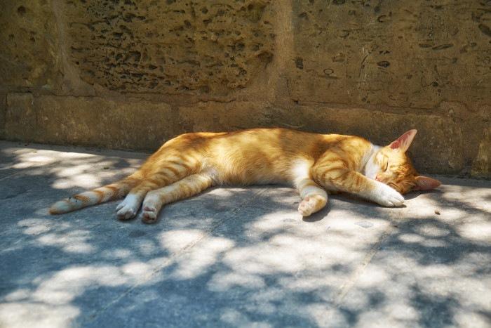 外で寝そべる猫
