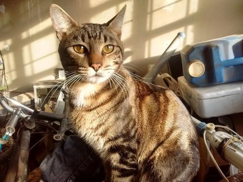 乱雑な部屋の中の悲しげな猫