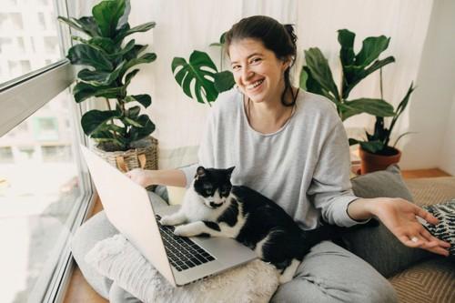 パソコン中の人に寄りかかる猫